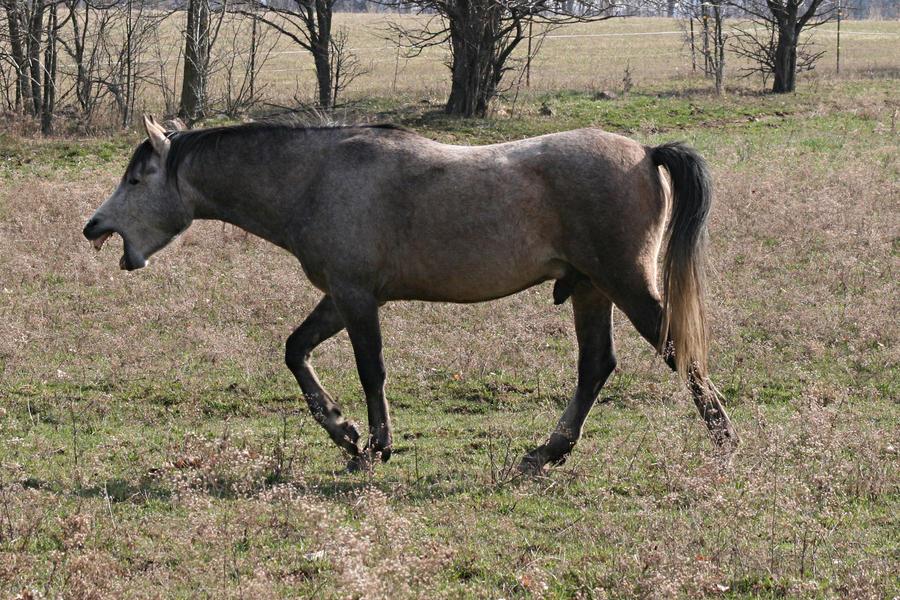 how to keep a grey horse dark