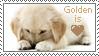 Golden Retriever by TorriaMuse