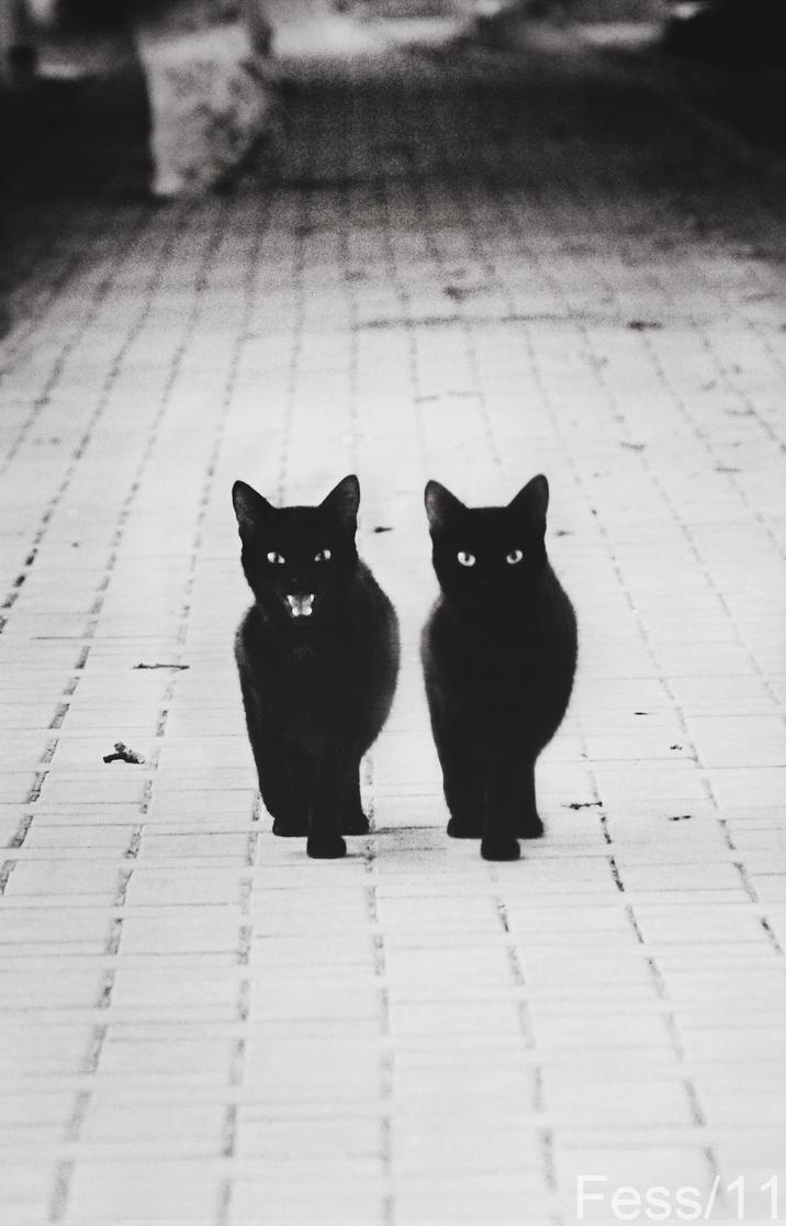 cat_cat by Subway-M