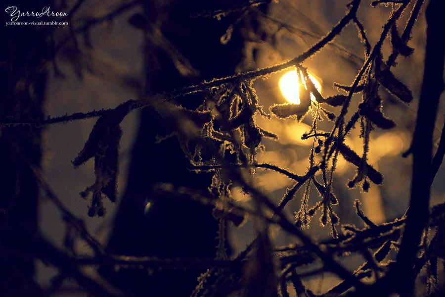 Light throught by YarroAroon