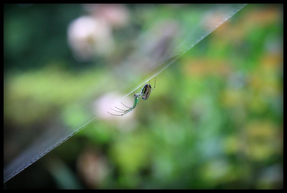 Spider by peterhirschberg