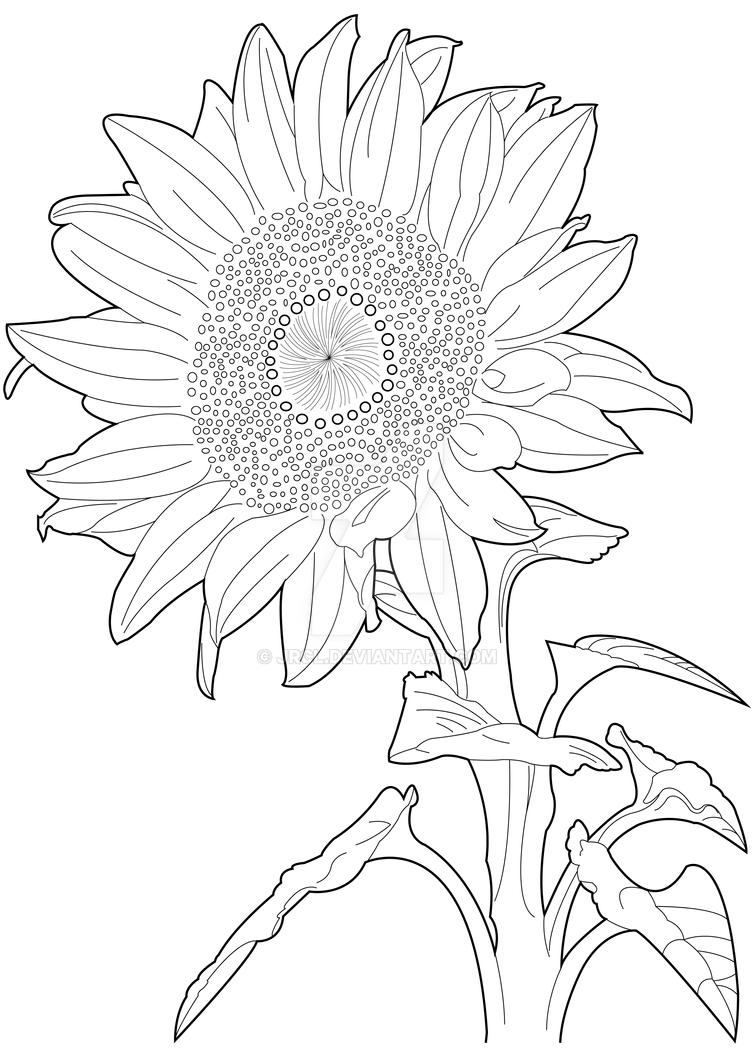 Sunflower by JRCL