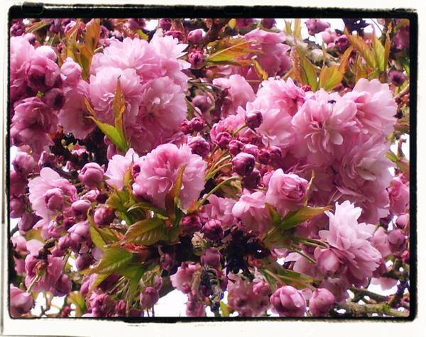 inspired blossom by 8-days-till-sunday