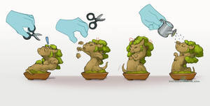 How to take care of your Bonsai Dragon