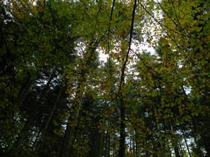 ' under the foliage '