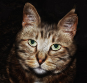 Old-Catdude's Profile Picture
