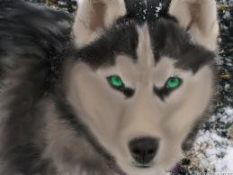 Green Eyed husky by PantherThePanda on DeviantArt