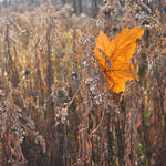 A Leaf in Autumn VIII by hyneige