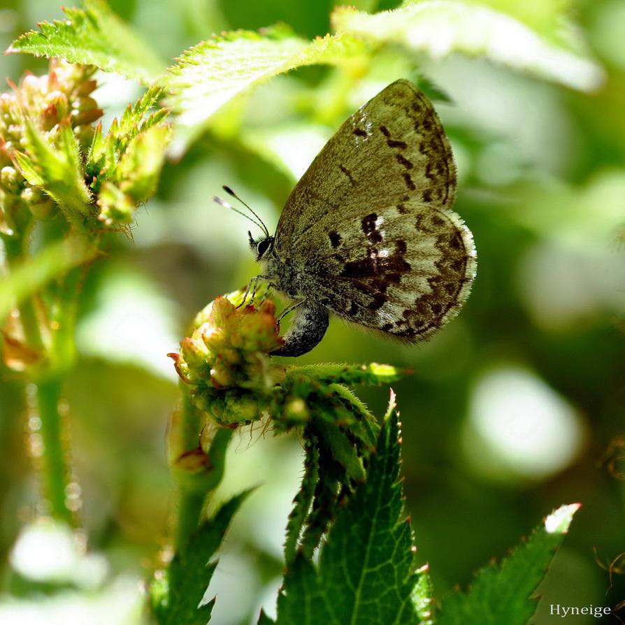 Lumiere et Papillon by hyneige
