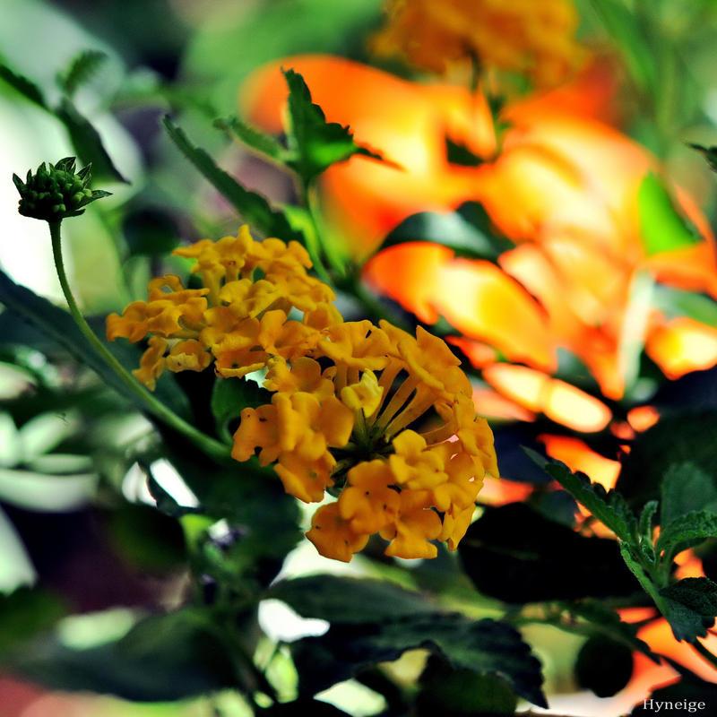 Des Oranges en Feu by hyneige