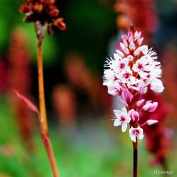 Petites Fleurs d'Automne III