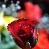Un Amour Sincere et Profond II by hyneige
