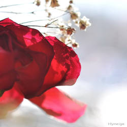 Douce Transparence Amours I
