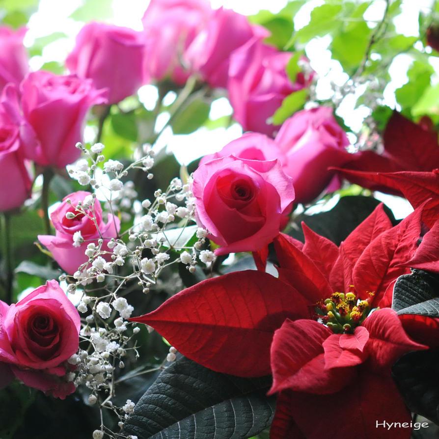 Des Roses en Hiver by hyneige