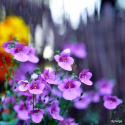 En Fremissement de violet I
