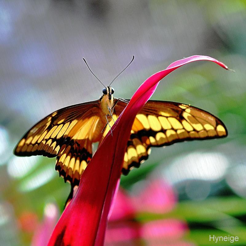 Papillon vitrail sur tige by hyneige on deviantart - Papillon sur tige ...