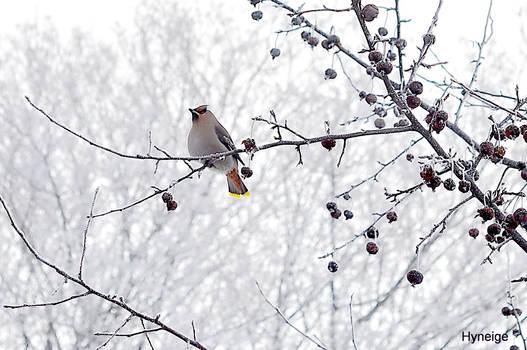 Un oiseau en Hiver