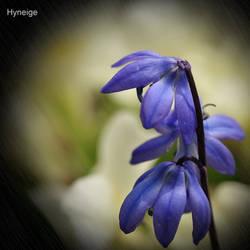 En bleu sur jaune printemps