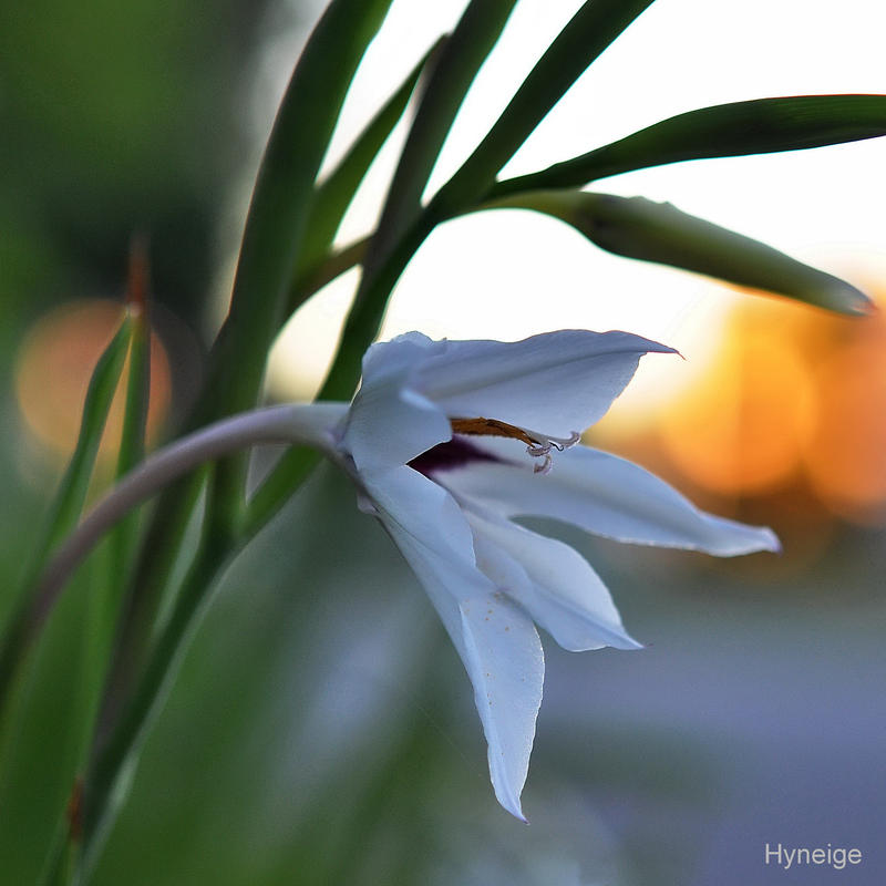 En pudeur sur le crepuscule by hyneige