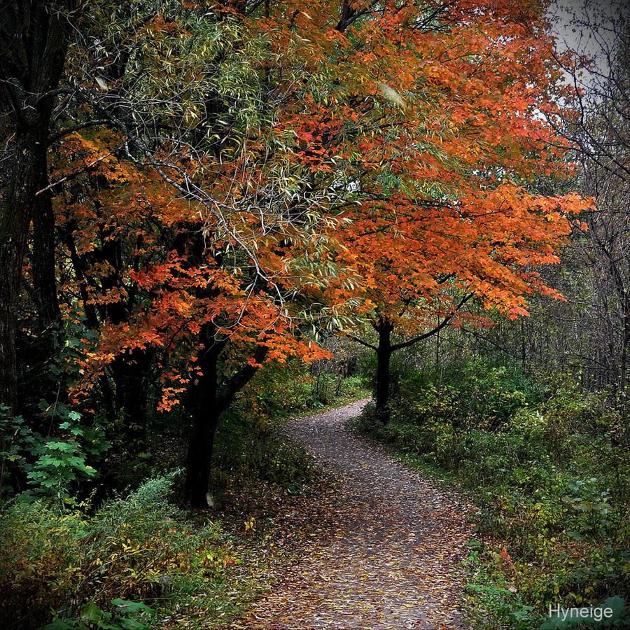Les sentiers de l'automne II by hyneige