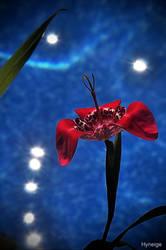 Une fleur pour l'eternite