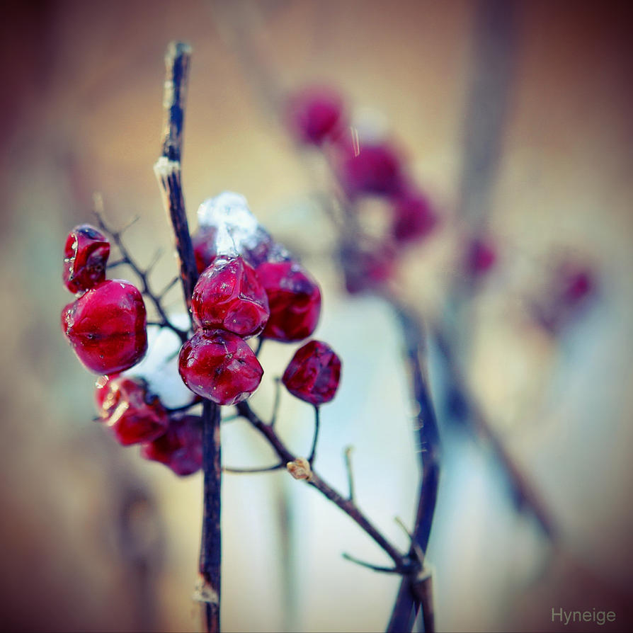 Petits fruits de l'hiver II by hyneige