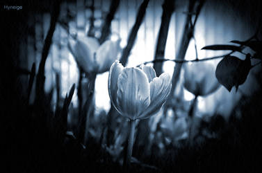 Quand le printemps s'eclate II by hyneige