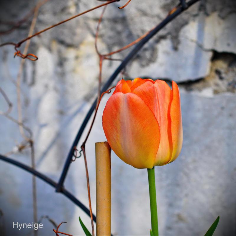 En orange sur murmure by hyneige
