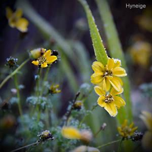 Petite fleur givre I
