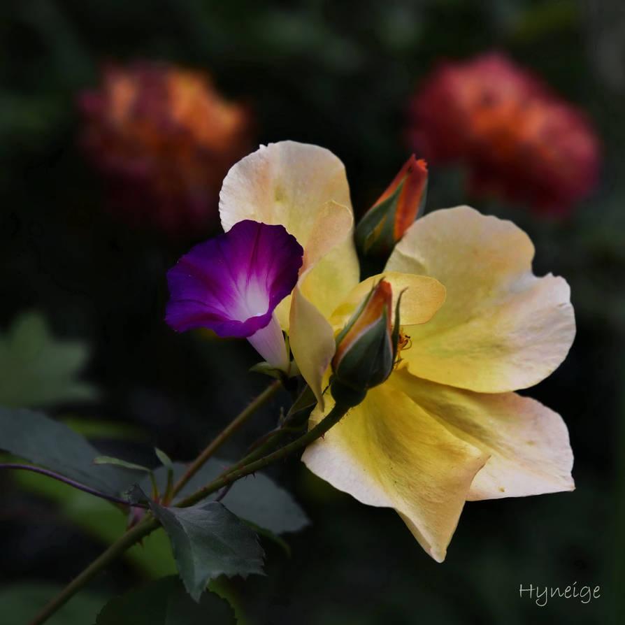 Enlacement floral I