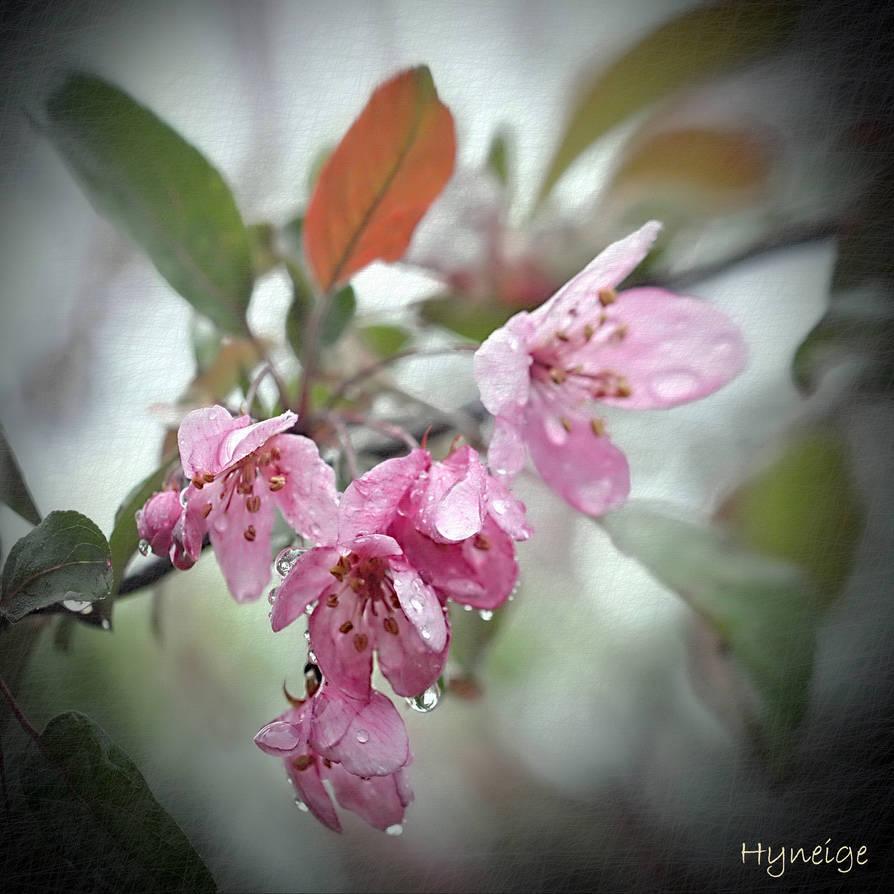 Le printemps pleure I