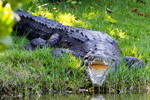 Croc mouth