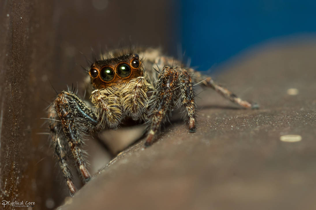 beautiful_eyes_jumper_by_cyclicalcore_d9