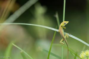 Climbing through the grass by CyclicalCore