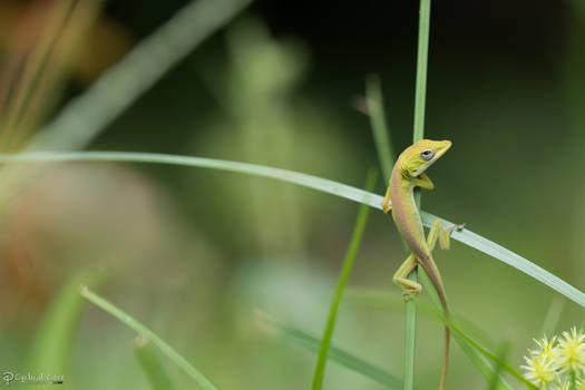 Climbing through the grass