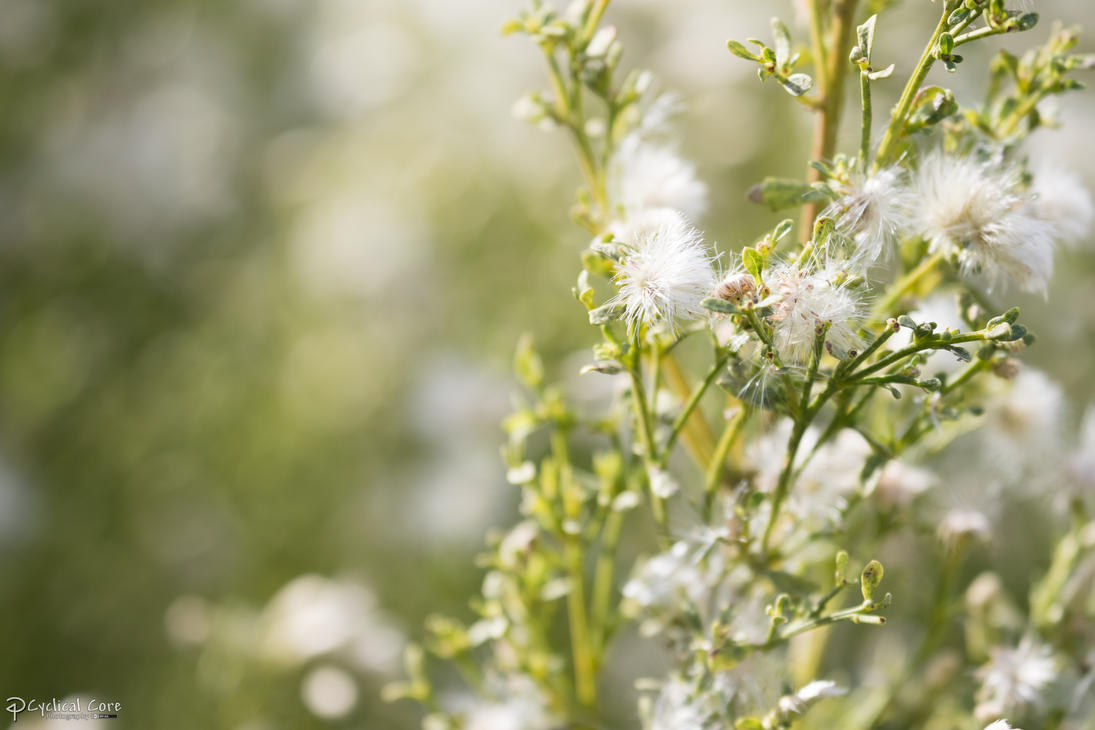 White flowers by cyclicalcore on deviantart - Flower wallpaper 7d ...