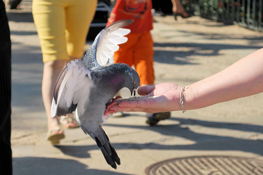 feeding pigeon by Lady-Vetinari