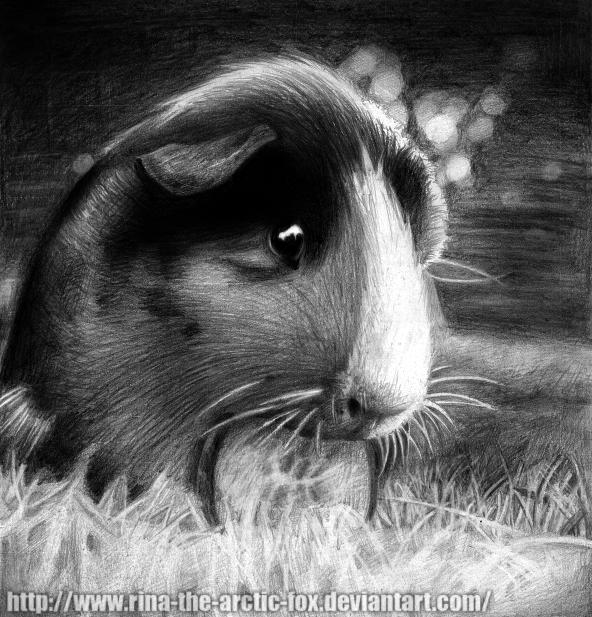 Guinea Pig by DeadOceans on DeviantArt