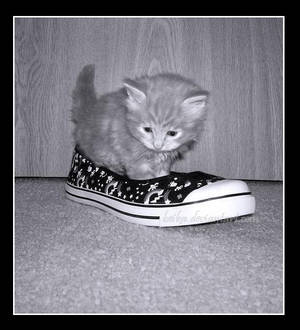 A Kitten Who Lived in a Shoe