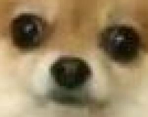 dogeyplz's Profile Picture