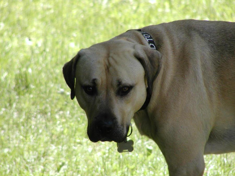 Camera Whore - 12 - Big scary doggie by blackhavikgraphics