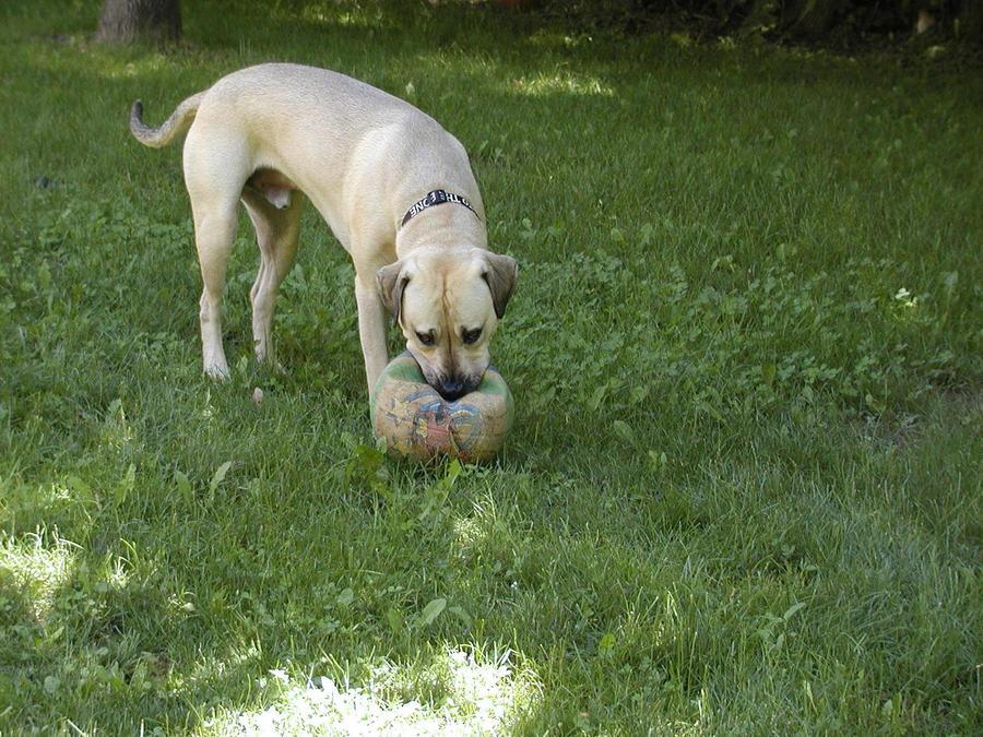 Camera Whore - 14 - Deflated Ball - Killed by Pony by blackhavikgraphics