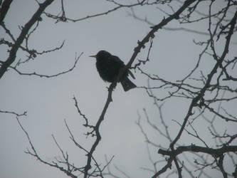 Bird on Branch by Wonderdyke-Stock
