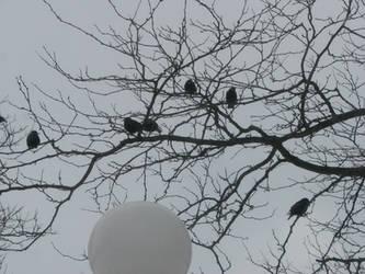 Birdies in Trees II by Wonderdyke-Stock