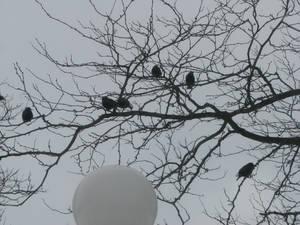 Birdies in Trees II