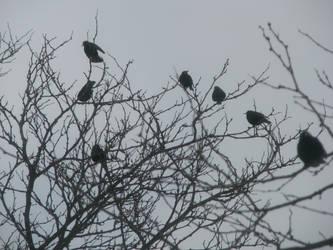 Birdies in Trees III by Wonderdyke-Stock