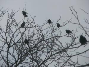 Birdies in Trees III