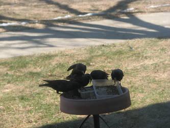 Birdie Birdie by Wonderdyke-Stock