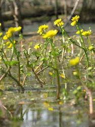 Swamp Flowers I by Wonderdyke-Stock