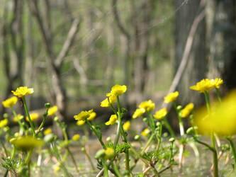 Swamp Flowers II by Wonderdyke-Stock